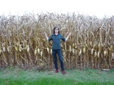 Dan amongst the Corn