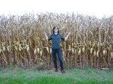 Dan amongst the Corn